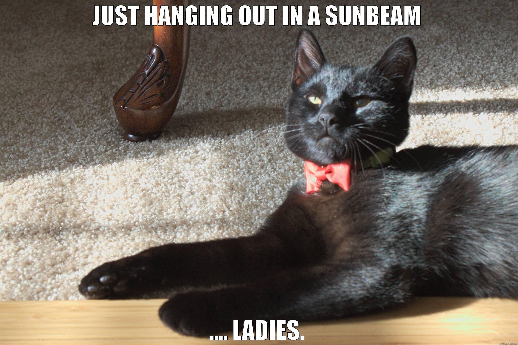 Kitten In A Bow Tie Fdfadfabbbcfeaafffde