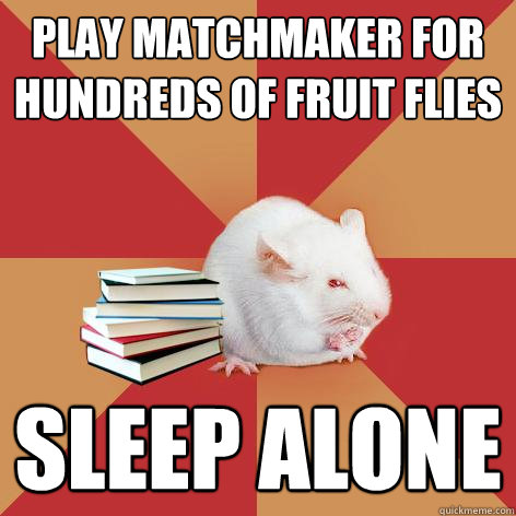 play matchmaker for hundreds of fruit flies sleep alone - play matchmaker for hundreds of fruit flies sleep alone  Science Major Mouse