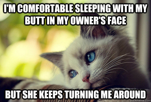 I'm comfortable sleeping with my butt in my owner's face But she keeps turning me around - I'm comfortable sleeping with my butt in my owner's face But she keeps turning me around  First World Problems Cat