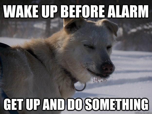 annoyed husky meme - photo #12
