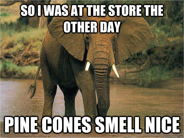 So I was at the store the other day pine cones smell nice - So I was at the store the other day pine cones smell nice  Irrelevant Elephant
