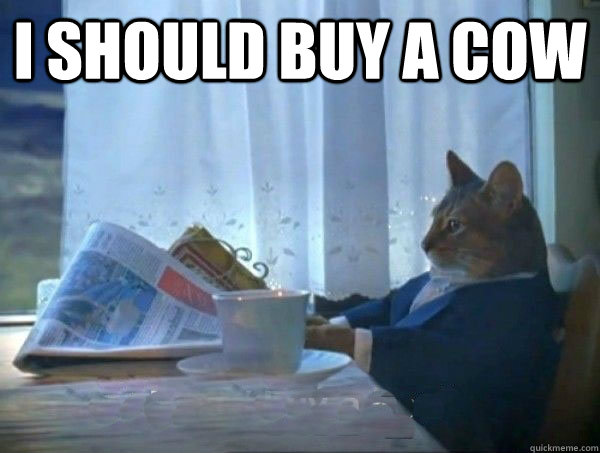 I should buy a cow  - I should buy a cow   morning realization newspaper cat meme