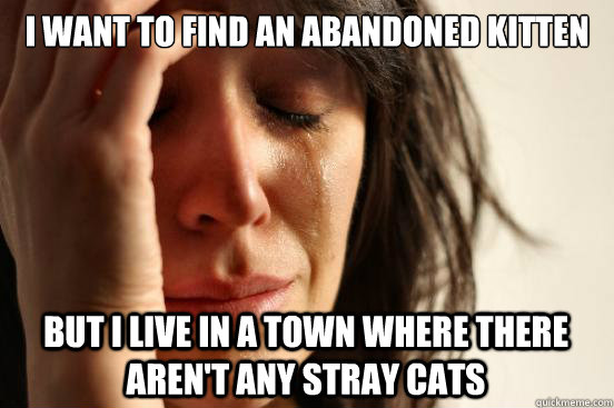 I want to find an abandoned kitten  But I live in a town where there aren't any stray cats - I want to find an abandoned kitten  But I live in a town where there aren't any stray cats  First World Problems