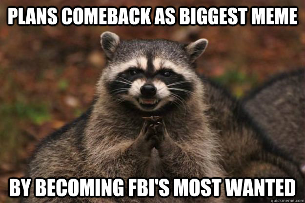 plans Comeback as biggest meme by becoming FBI's most wanted - plans Comeback as biggest meme by becoming FBI's most wanted  Evil Plotting Raccoon