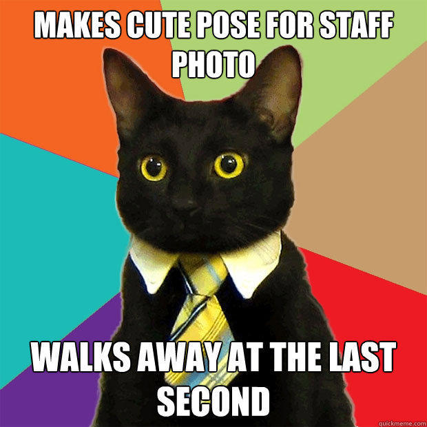 Makes cute pose for staff photo Walks away at the last second - Makes cute pose for staff photo Walks away at the last second  Business Cat