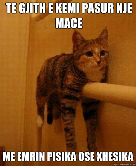 te gjith e kemi pasur nje mace me emrin pisika ose xhesika