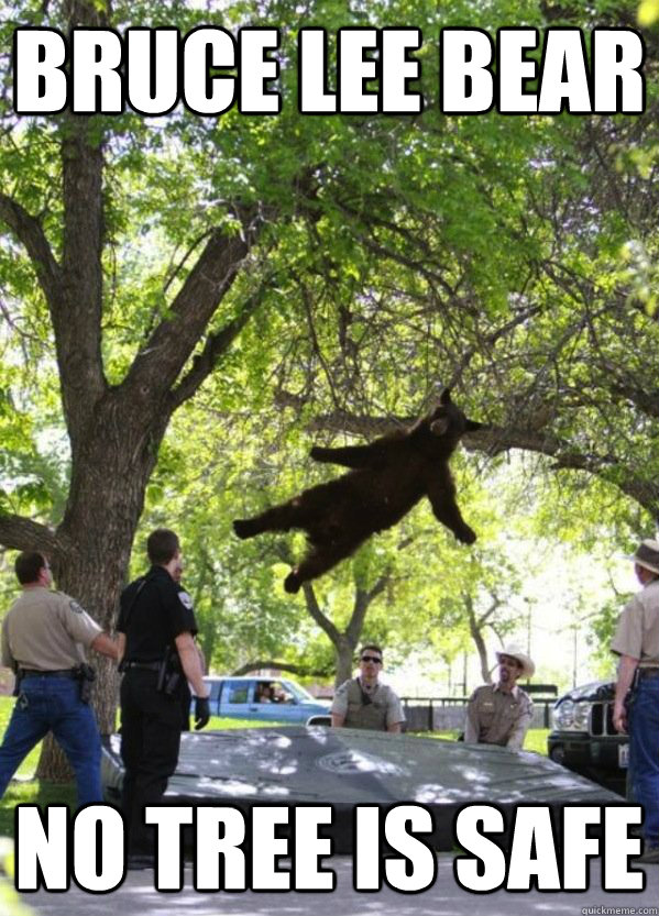 bruce lee bear no tree is safe  i am a falling bear