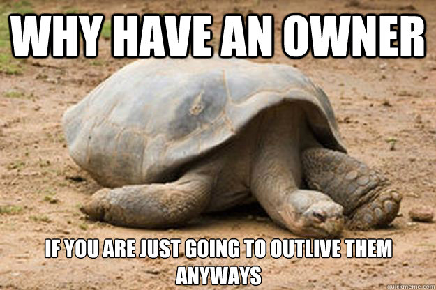 Why have an owner If you are just going to outlive them anyways  Depression Turtle