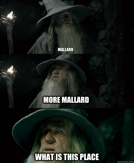Mallard what is this place More mallard - Mallard what is this place More mallard  Confused Gandalf