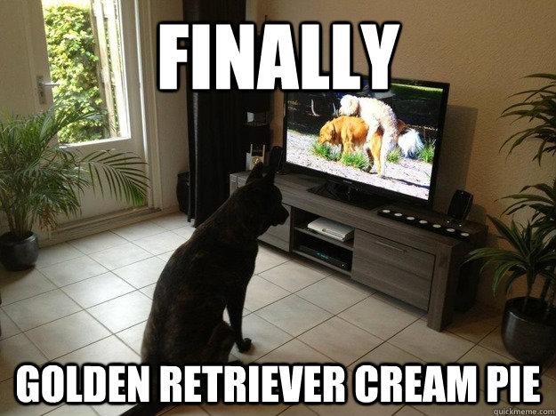 Finally Golden Retriever Cream Pie  Porno Dog