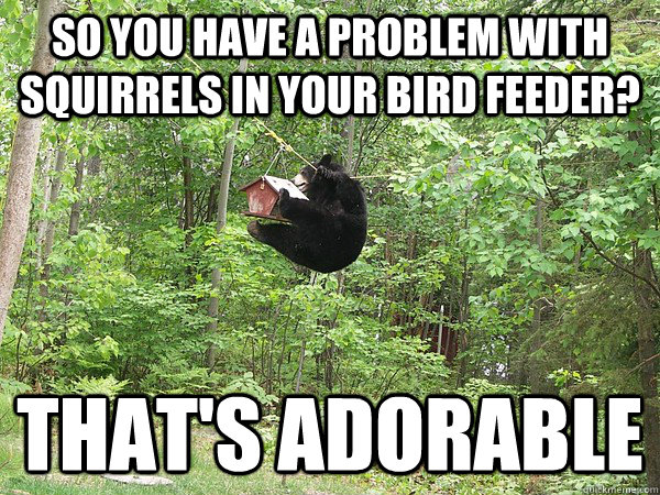 12d256fab50e1b08b67bda83a77fc5325fbf9cef8658949ef2d2b9219f995fee so you have a problem with squirrels in your bird feeder? that's