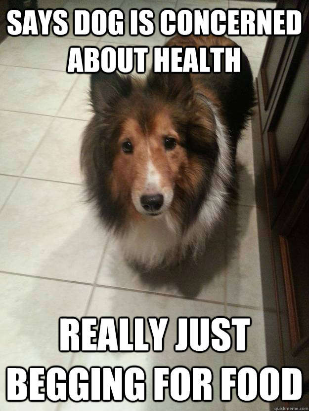 Says dog is concerned about health Really just begging for food - Says dog is concerned about health Really just begging for food  Misc