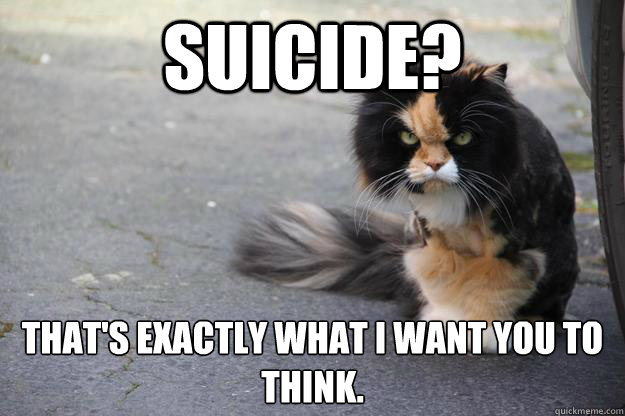 suicide? That's exactly what I want you to think. - suicide? That's exactly what I want you to think.  Indtroducing angry cat