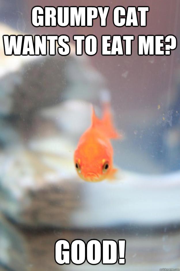 Grumpy cat wants to eat me? Good!