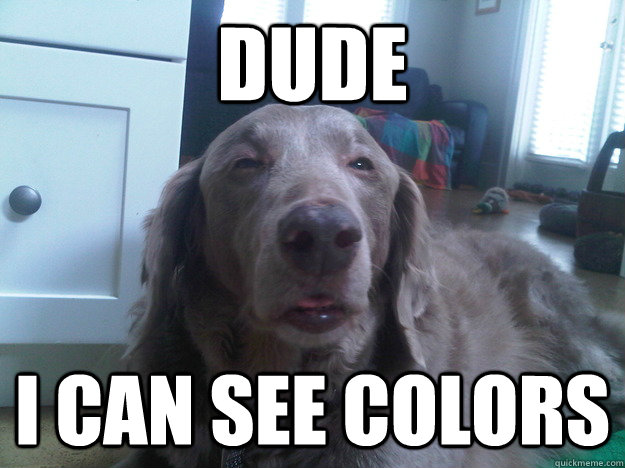 Dude I can see colors  10 Dog