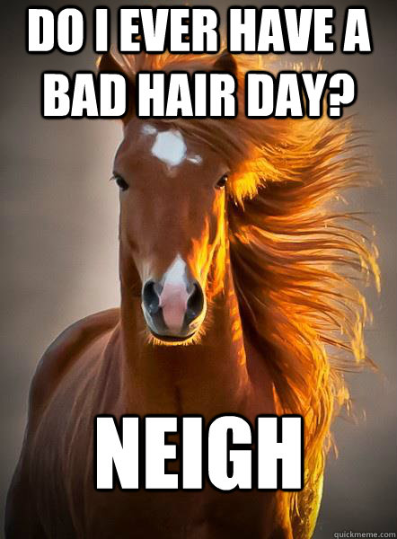 Do I ever have a bad hair day? Neigh - Do I ever have a bad hair day? Neigh  Ridiculously Photogenic Horse