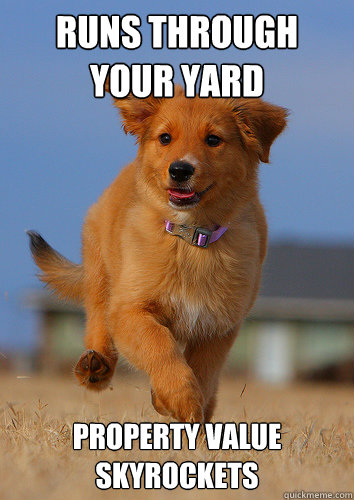 runs through your yard property value skyrockets - runs through your yard property value skyrockets  Ridiculously Photogenic Puppy