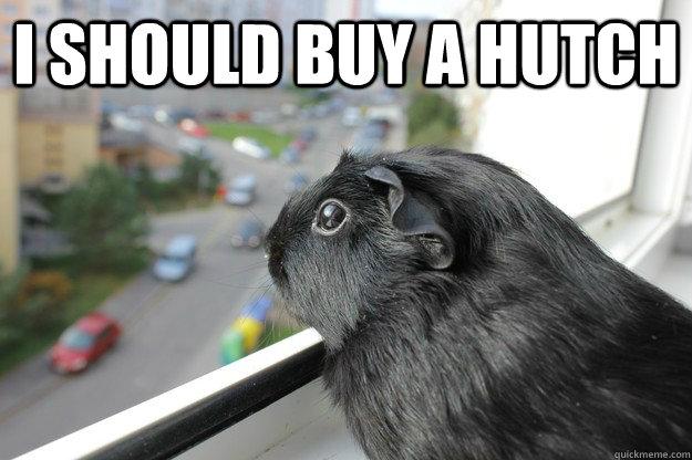I should buy a hutch  - I should buy a hutch   Pensive Piggie