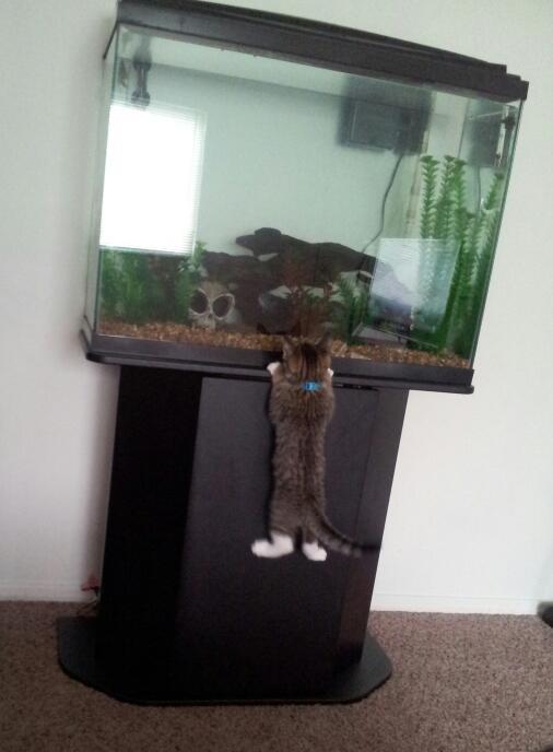 My curious kitten -   Misc