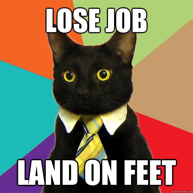 lose job land on feet  Business Cat