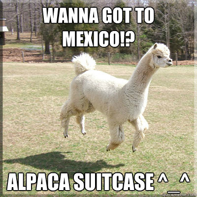 Wanna Got To Mexico!? Alpaca Suitcase ^_^