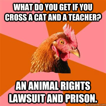 What do you get if you cross a cat and a teacher? An animal rights lawsuit and prison. - What do you get if you cross a cat and a teacher? An animal rights lawsuit and prison.  Anti-Joke Chicken
