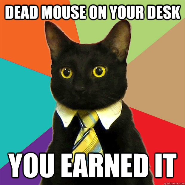 dead mouse on your desk you earned it - dead mouse on your desk you earned it  Business Cat
