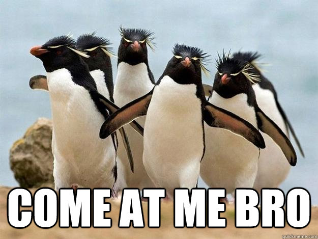 Image result for come at me bro meme penguin