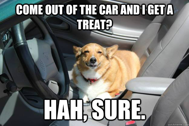 Come out of the car and I get a treat? Hah, Sure. - Come out of the car and I get a treat? Hah, Sure.  Skeptical Dog