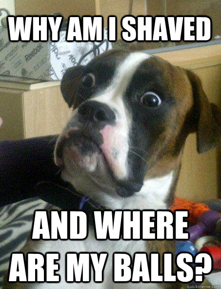 Why am I shaved and where are my balls? - Why am I shaved and where are my balls?  Baffled boxer