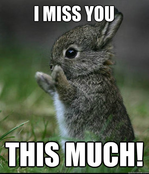 1632599c28e5b12aca8cc146d0d91f0c783244239c40133085e0cb9f8c047588 i miss you this much! dis much bunny quickmeme