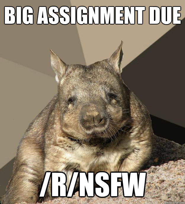 Big assignment due /r/nsfw  Work From Home Wombat