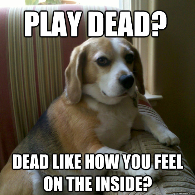 Play dead? Dead like how you feel on the inside? - Play dead? Dead like how you feel on the inside?  judgmental dog