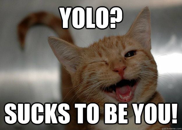 YOLO? SUCKS TO BE YOU! - YOLO? SUCKS TO BE YOU!  Sarcastic Cat