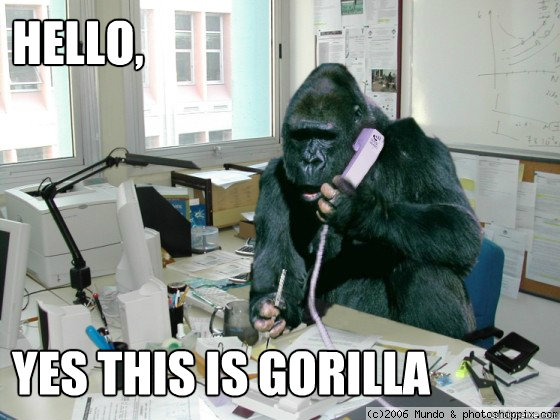 Hello,      yes this is gorilla  gorilla meme