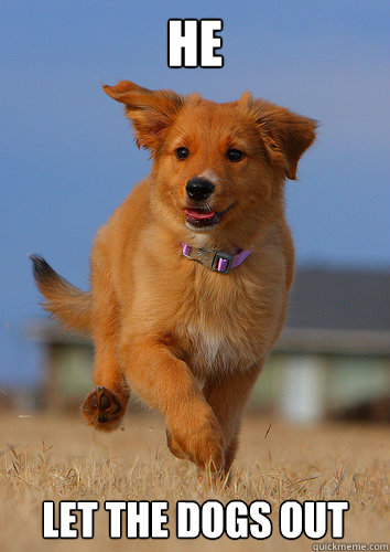 He let the dogs out - He let the dogs out  Ridiculously Photogenic Puppy