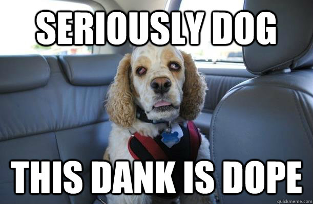Seriously Dog This dank is dope - Seriously Dog This dank is dope  10 Dog