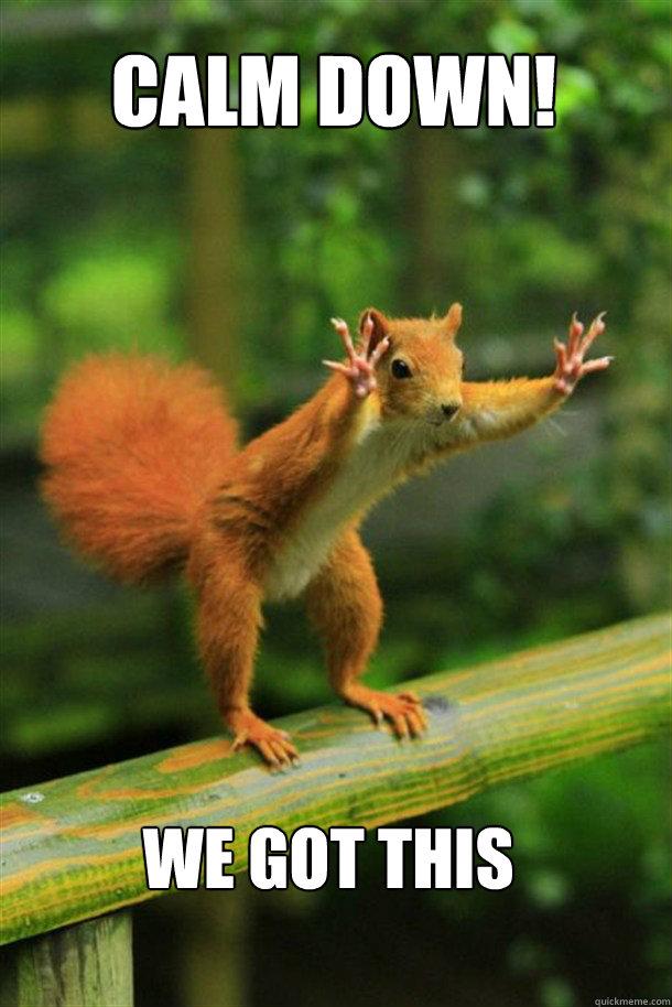CALM DOWN! We got this  - CALM DOWN! We got this   Squirrel