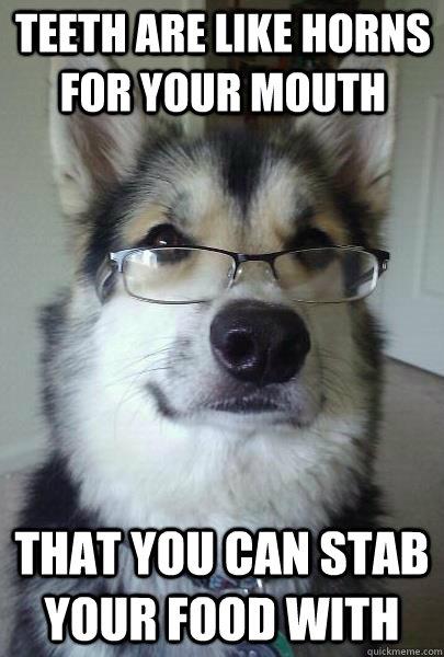 annoyed husky meme - photo #11