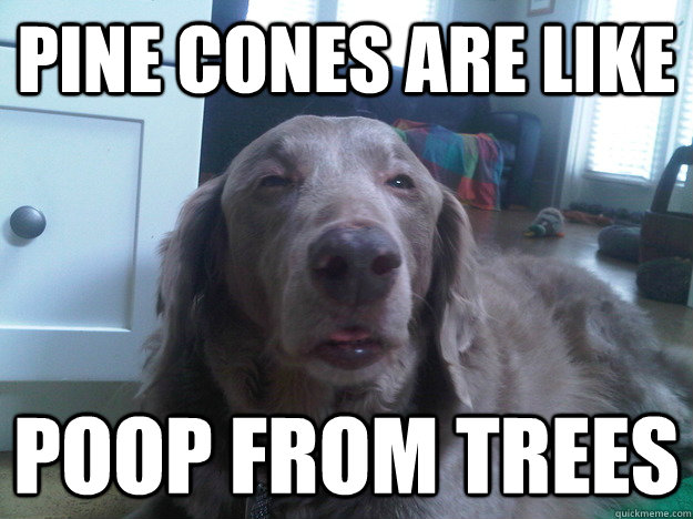 Pine cones are like poop from trees - Pine cones are like poop from trees  10 Dog