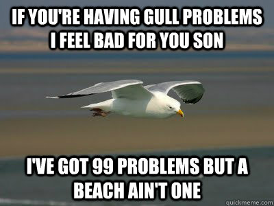 If you're having gull problems i feel bad for you son i've got 99 problems but a beach ain't one - If you're having gull problems i feel bad for you son i've got 99 problems but a beach ain't one  Gull Problems