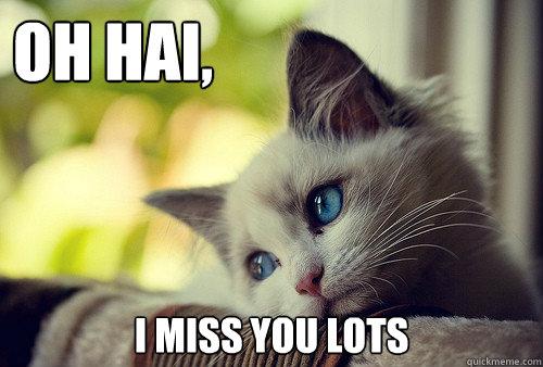 oh hai, I miss you lots - oh hai, I miss you lots  First World Problems Cat