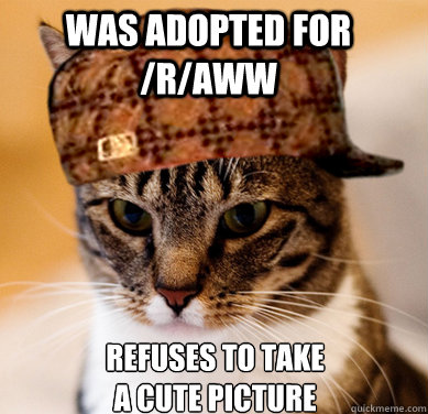 was adopted for /r/aww refuses to take a cute picture - was adopted for /r/aww refuses to take a cute picture  Scumbag Cat
