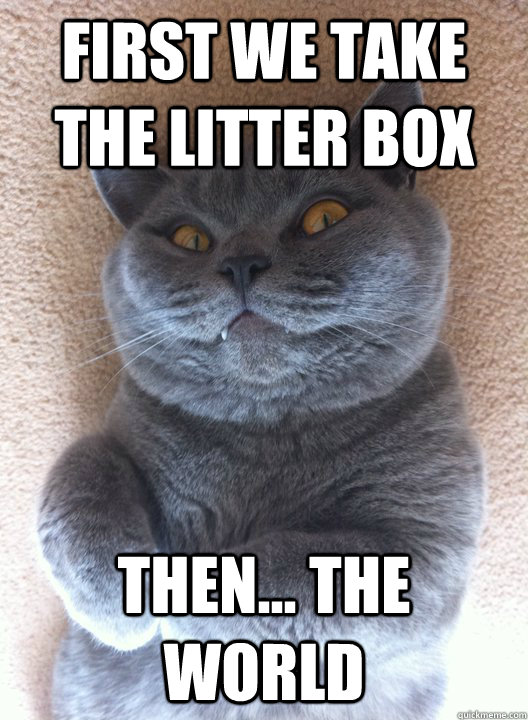 First we take the Litter box then... the world  Evil Cat