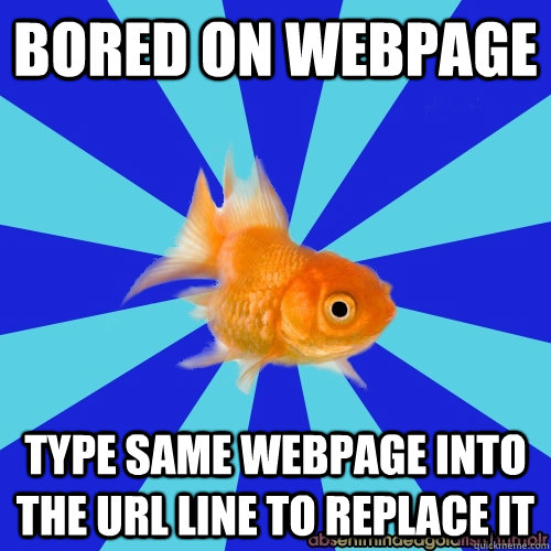 BORED ON WEBPAGE TYPE SAME WEBPAGE INTO THE URL LINE TO REPLACE IT - BORED ON WEBPAGE TYPE SAME WEBPAGE INTO THE URL LINE TO REPLACE IT  Absentminded Goldfish