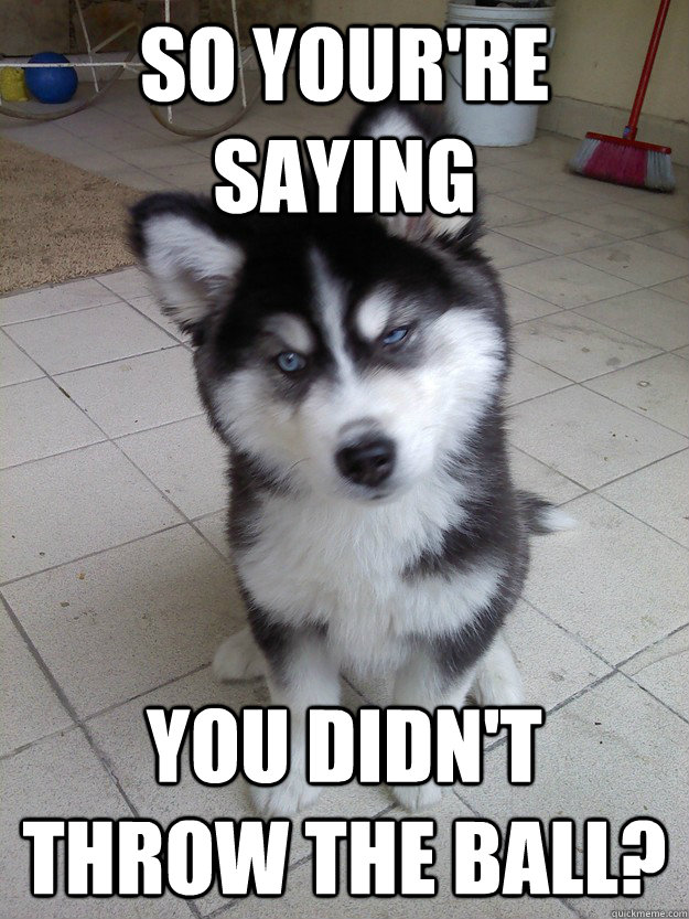 So Your're saying you didn't throw the ball? - So Your're saying you didn't throw the ball?  Skeptical Dog