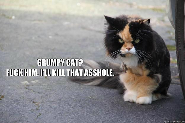 Grumpy Cat? Fuck him. I'll kill that asshole. - Grumpy Cat? Fuck him. I'll kill that asshole.  Angry Cat