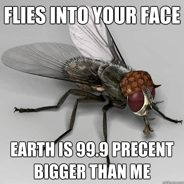 flies into your face earth is 99.9 precent bigger than me - flies into your face earth is 99.9 precent bigger than me  Scumbag Fly