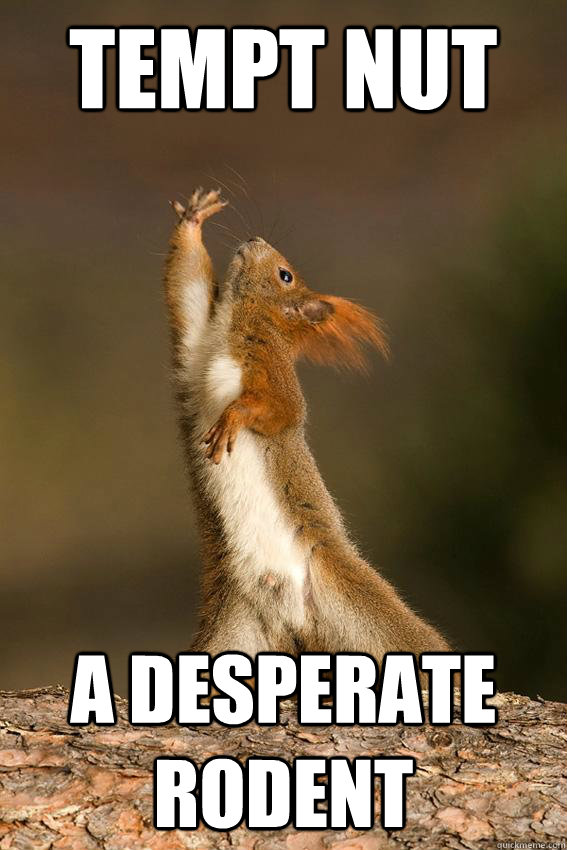 Tempt nut A desperate rodent - Tempt nut A desperate rodent  Shakespeare Squirrel