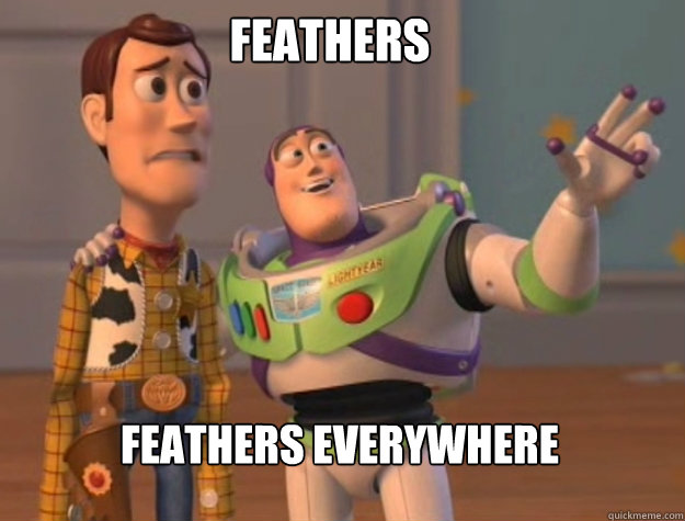 feathers feathers everywhere - feathers feathers everywhere  buzz